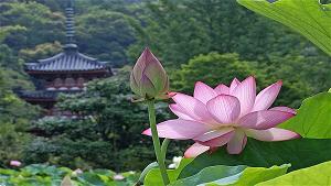 Tu học Phật pháp - Tâm cảnh nhất như