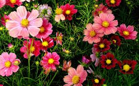Bài viết, tiểu luận, truyện ngắn - Rác làm đẹp cho hoa