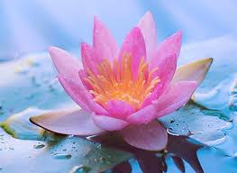 Sử Dụng Thất Giác Chi (Thất Bồ Đề Phần) Trong Công Phu Môn Niệm Phật - Ý hướng triết lý trong phương thức hành xử của đạo Phật Việt Nam