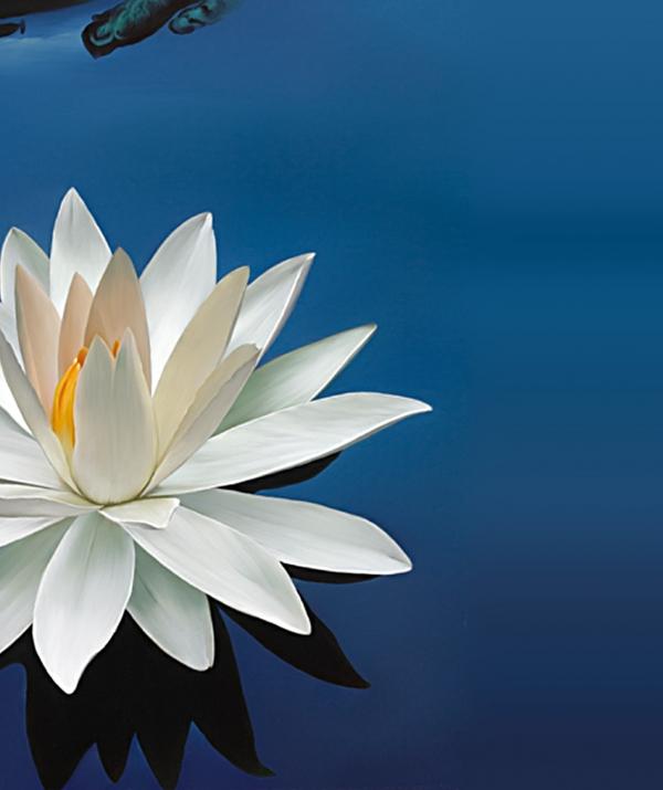 Tu học Phật pháp - Những tấm gương sáng