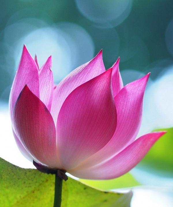 Sử Dụng Thất Giác Chi (Thất Bồ Đề Phần) Trong Công Phu Môn Niệm Phật - Tài thuyết pháp của ngài Ca-chiên-diên