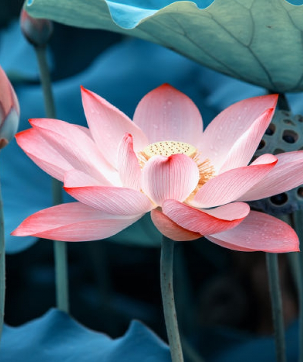 Sử Dụng Thất Giác Chi (Thất Bồ Đề Phần) Trong Công Phu Môn Niệm Phật - Hương Phật