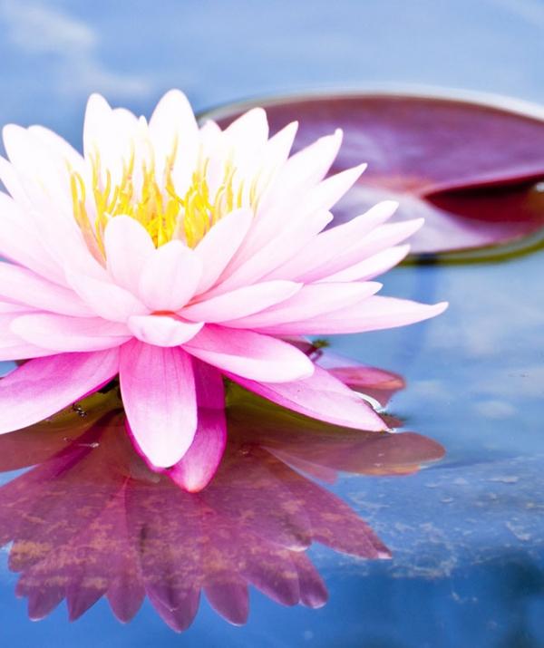 Mục đích của đạo Phật - Tàm và quý - Dệt một mùa xuân