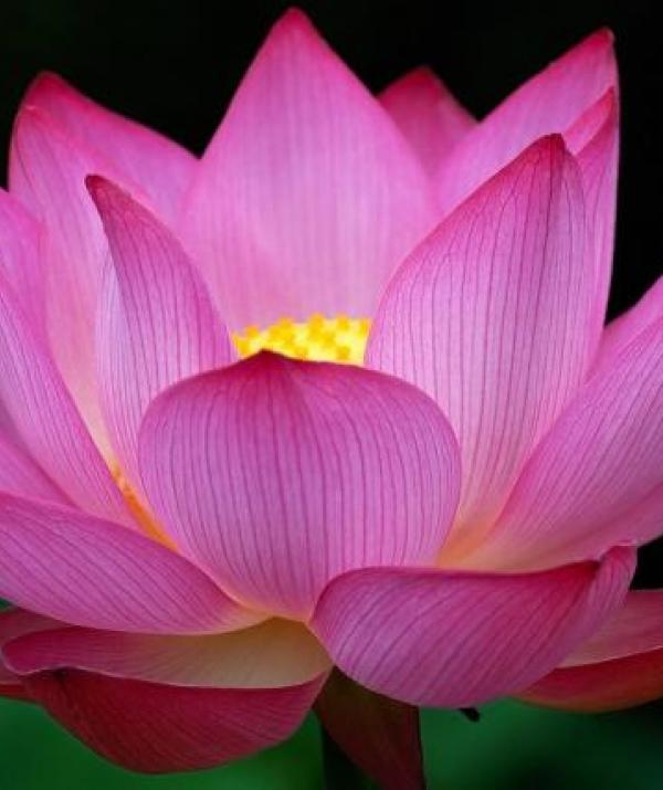 Sử Dụng Thất Giác Chi (Thất Bồ Đề Phần) Trong Công Phu Môn Niệm Phật - Mười điều nghi vấn về Tịnh Độ