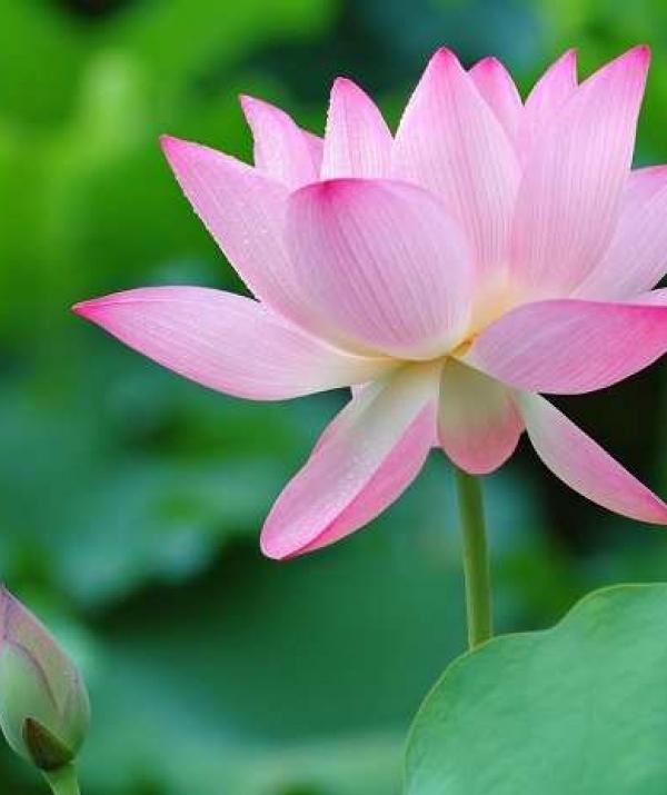 Sử Dụng Thất Giác Chi (Thất Bồ Đề Phần) Trong Công Phu Môn Niệm Phật - Ra mắt sách thiền của Nguyên Giác và Đào Văn Bình