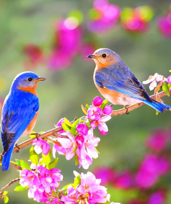 Bài viết, tiểu luận, truyện ngắn - Khát vọng mùa xuân