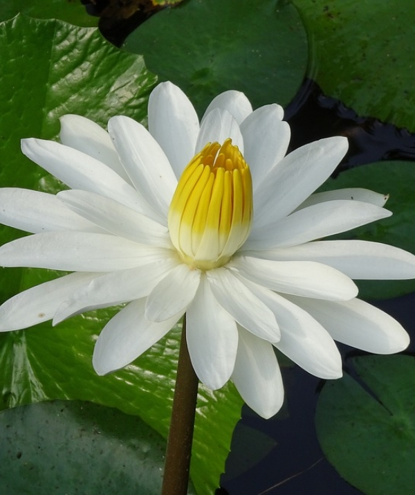 Tu học Phật pháp - Mọi sự vật đều thay đổi