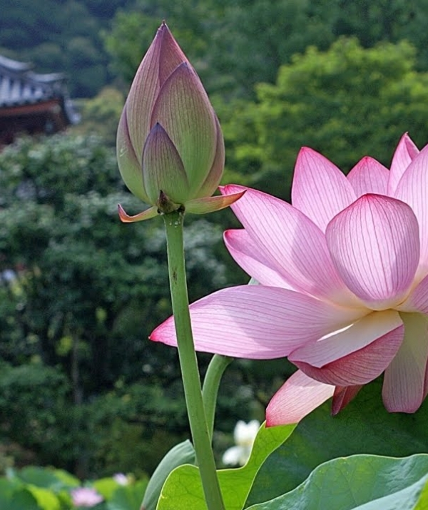 Sử Dụng Thất Giác Chi (Thất Bồ Đề Phần) Trong Công Phu Môn Niệm Phật - Phương ngoại với hồng quần