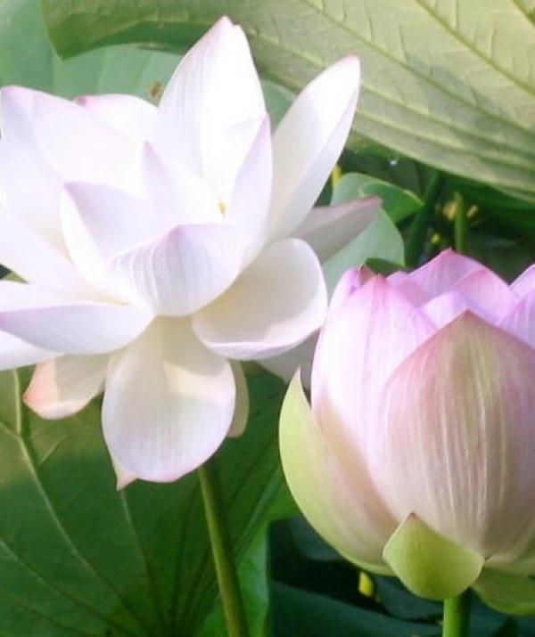 Tu học Phật pháp - Đức Phật: Thấy Pháp Là Thấy Ta