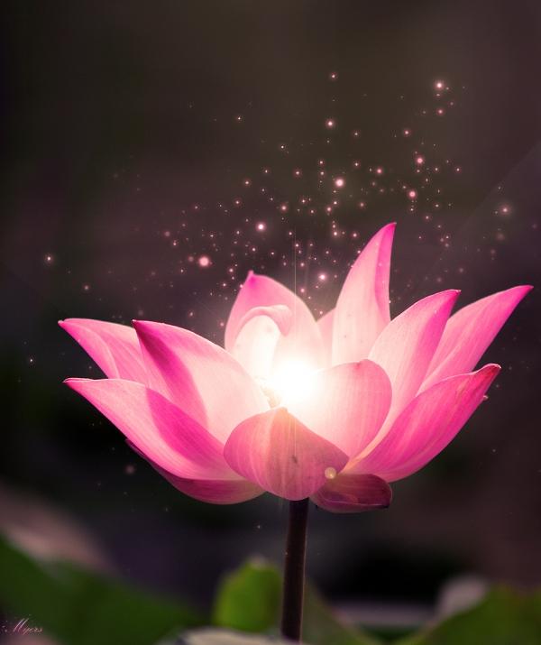 Tu học Phật pháp - Thật thà niệm Phật