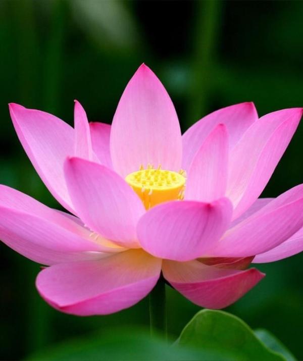 Tu học Phật pháp - Trung hiếu là đạo làm đầu