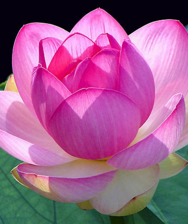 Bài viết, tiểu luận, truyện ngắn - Phật khuyên chúng sinh phải đoạn trừ nghi hoặc