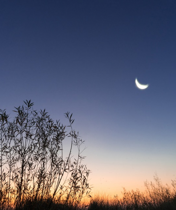 Bài viết, tiểu luận, truyện ngắn - Vầng trăng soi rọi