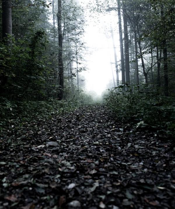Bài viết, tiểu luận, truyện ngắn - Nửa giờ trong Hang Cọp