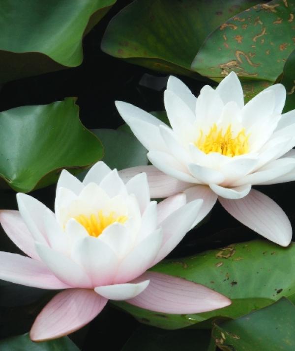Tu học Phật pháp - Trung trụ Bồ Tát
