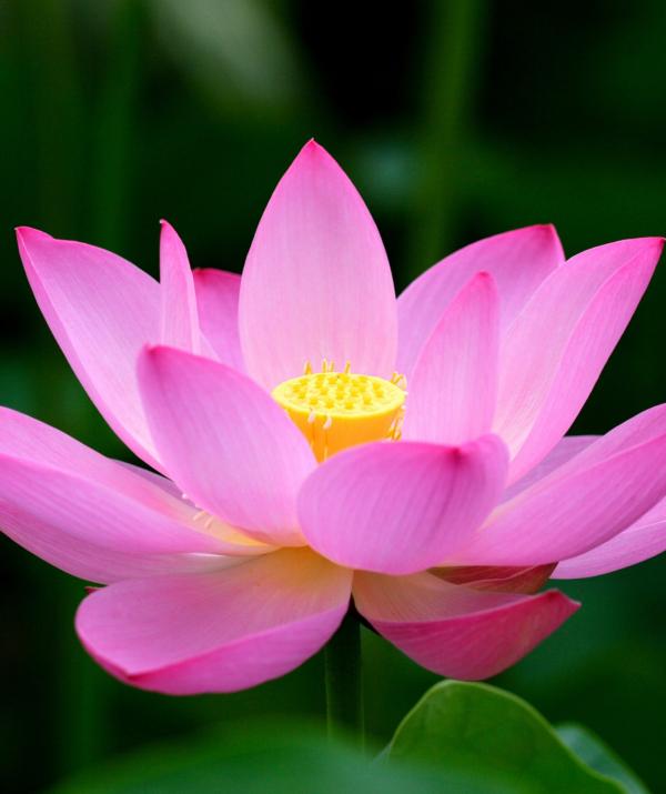 Tu học Phật pháp - Nghiệp và Giải Nghiệp theo Chánh Pháp
