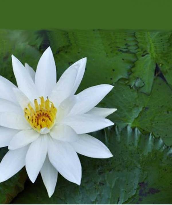 Tu học Phật pháp - Ngũ trí đối trị ngũ  uẩn