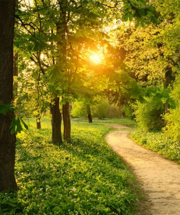 Bài viết, tiểu luận, truyện ngắn - Thiền Đi Bộ