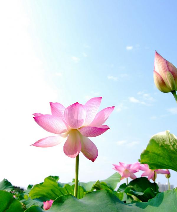 Văn học Phật giáo - Phật tử và Kinh điển