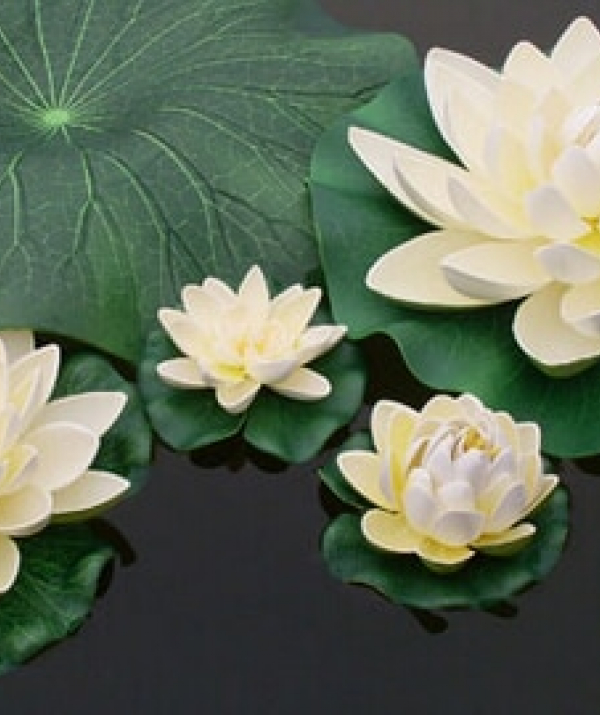 Bài viết, tiểu luận, truyện ngắn - Để Ngộ Tông Chỉ Phật
