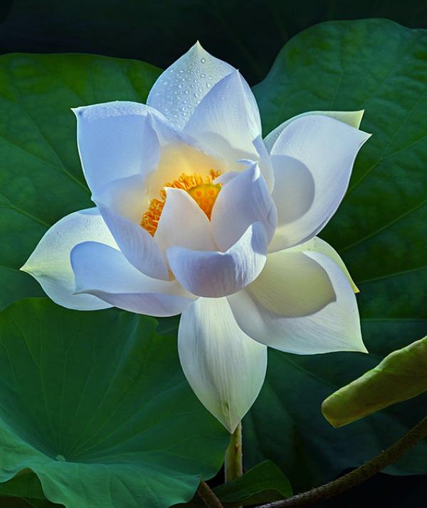 Văn học Phật giáo - Quán chiếu Bát-nhã