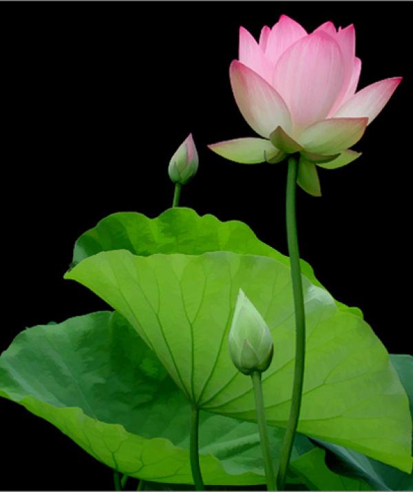Văn học Phật giáo - Có tự thì cũng phải có tại