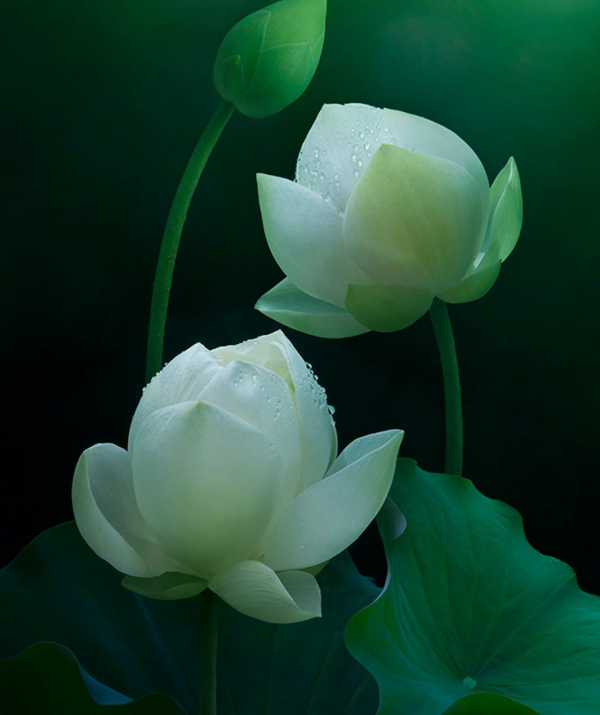 Bài viết, tiểu luận, truyện ngắn - Phật pháp thâm sâu, nghĩa nhiệm mầu