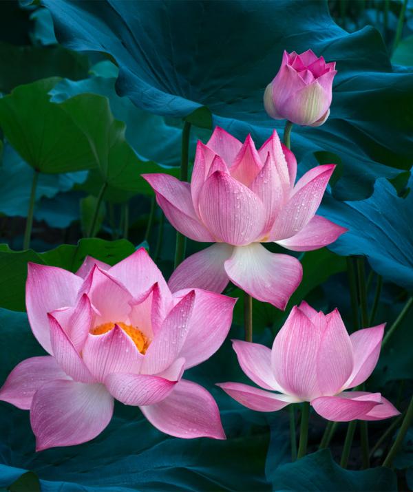 Văn học Phật giáo - Phải nên tự độ