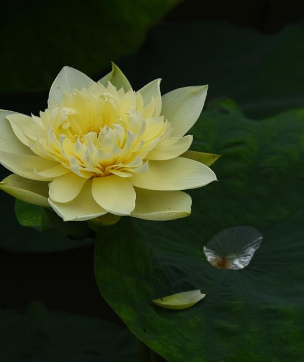 Văn học Phật giáo - Vô trụ Niết-bàn