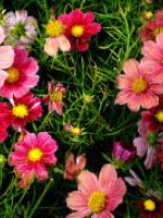 Rác làm đẹp cho hoa