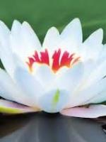 Đạo đức nhân quả Phật  giáo
