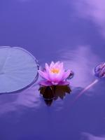 Đức Phật dạy về việc giữ giới (Trích kinh Đại Bát Niết-bàn)