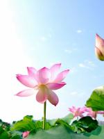Phật tử và Kinh điển