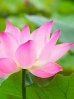 Thiền Tông Như Bè Pháp Qua Sông