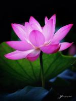 Ở chỗ Phật hành, nước thành tựu lạc.