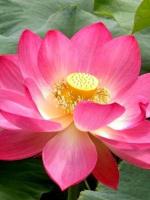 Hiểu rõ Phật trí